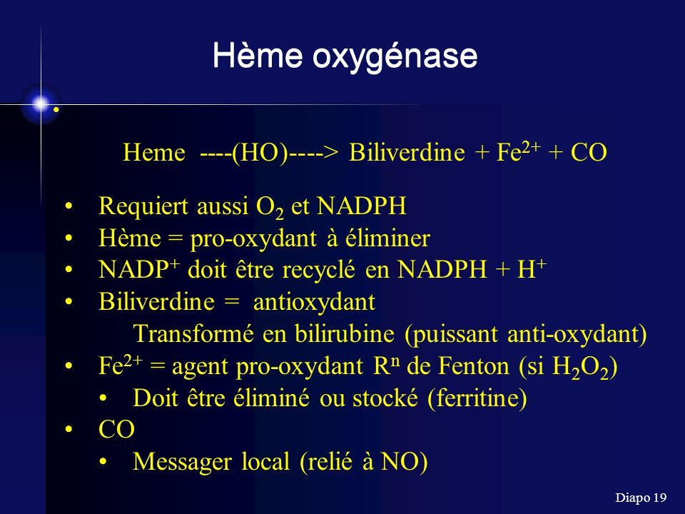 Heme ----(HO)----> Biliverdine + Fe2+ + CO