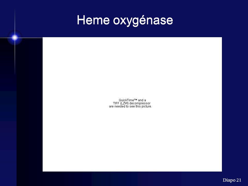 Heme oxygénase