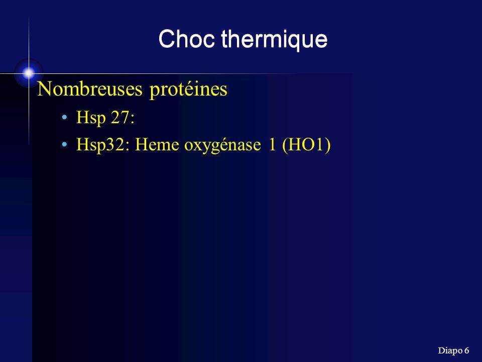 Choc thermique Nombreuses protéines Hsp 27: