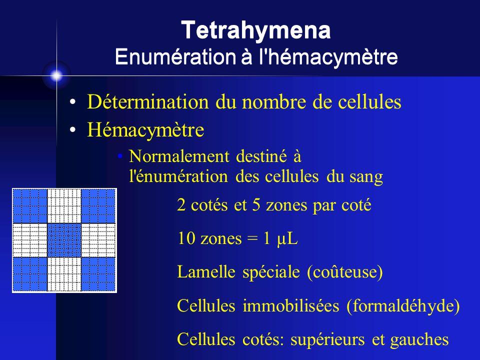 Tetrahymena Enumération à l hémacymètre