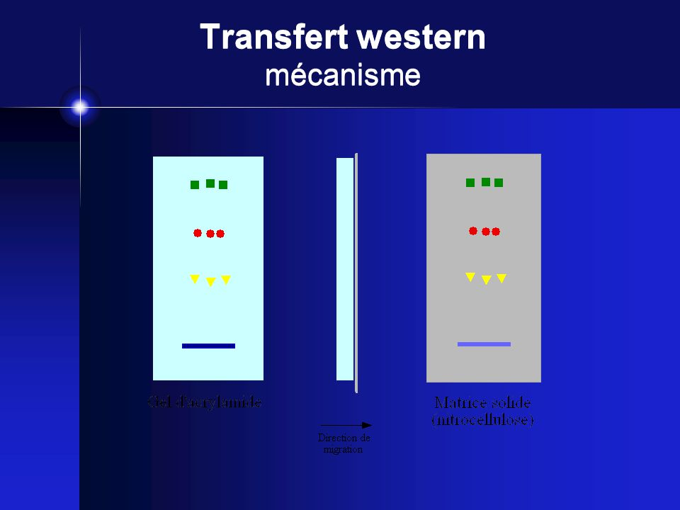 Transfert western mécanisme