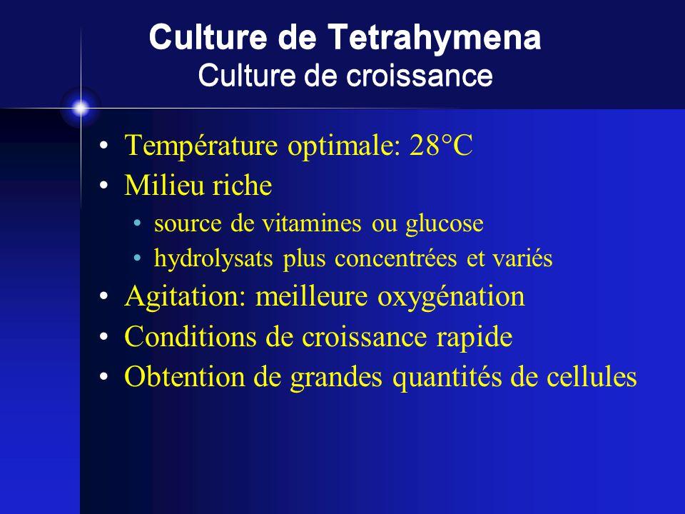 Culture de Tetrahymena Culture de croissance