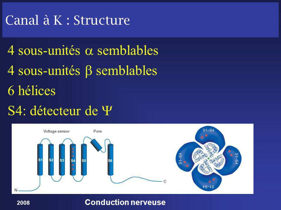 4 sous-unités  semblables 4 sous-unités  semblables 6 hélices