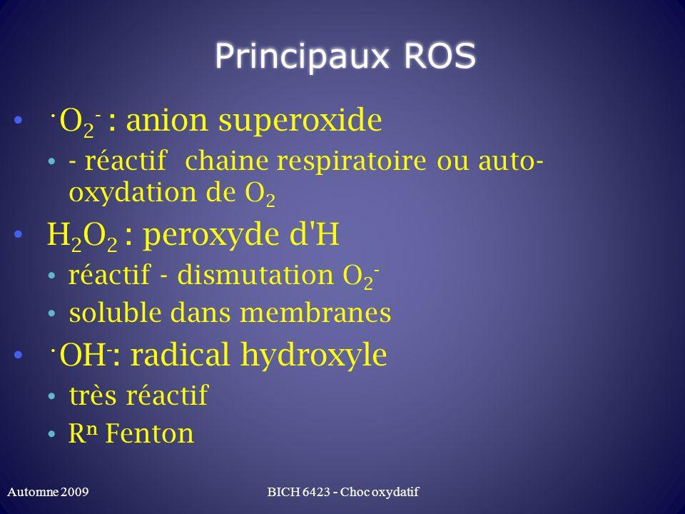 Principaux ROS •O2- : anion superoxide H2O2 : peroxyde d H