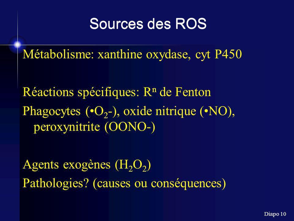 Sources des ROS Métabolisme: xanthine oxydase, cyt P450