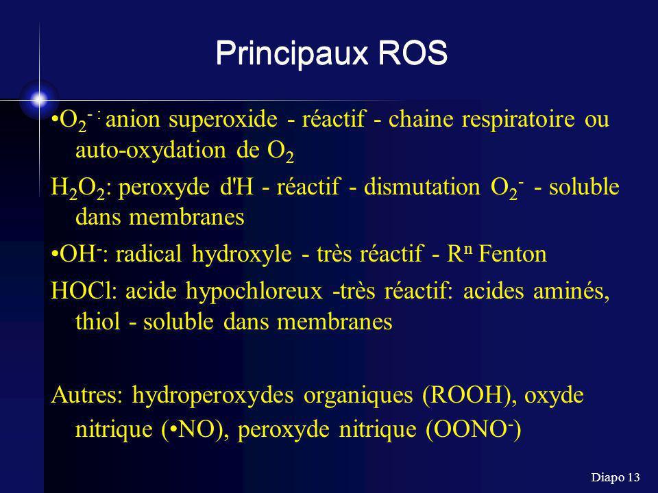 Principaux ROS •O2- : anion superoxide - réactif - chaine respiratoire ou auto-oxydation de O2.