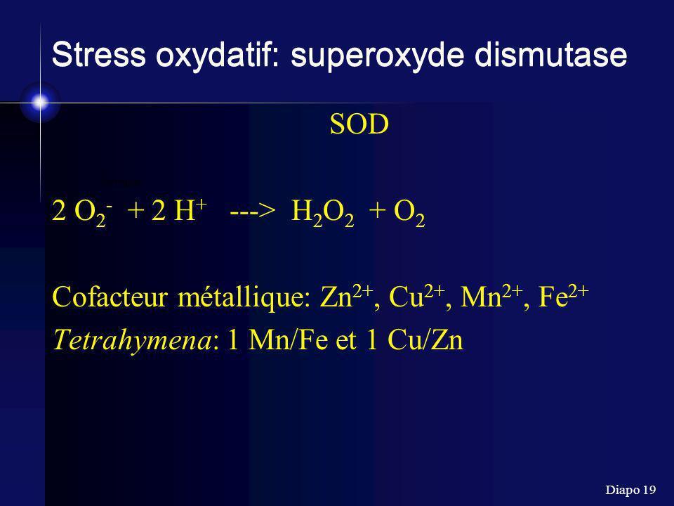 Stress oxydatif: superoxyde dismutase
