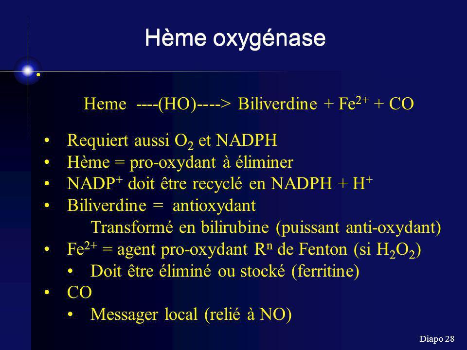 Heme ----(HO)----> Biliverdine + Fe2+ + CO
