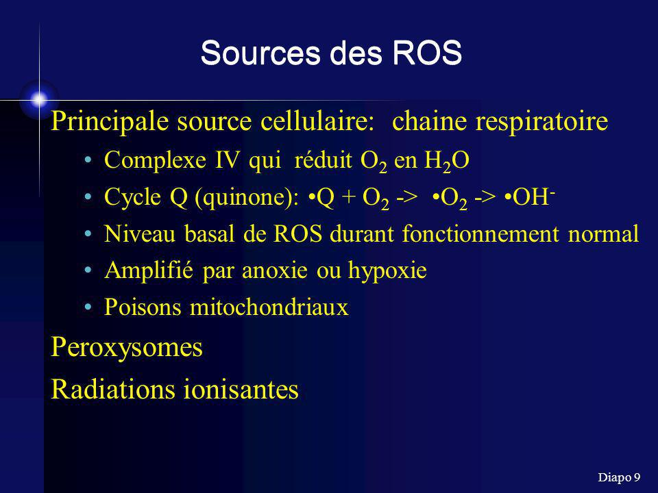 Sources des ROS Principale source cellulaire: chaine respiratoire