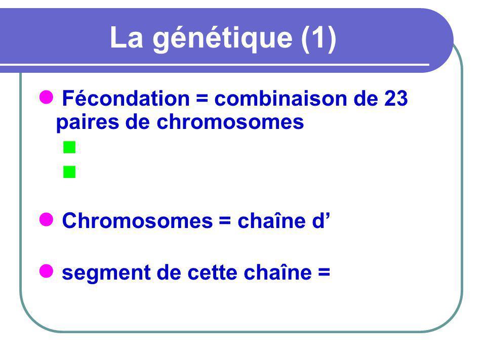 La génétique (1) Fécondation = combinaison de 23 paires de chromosomes