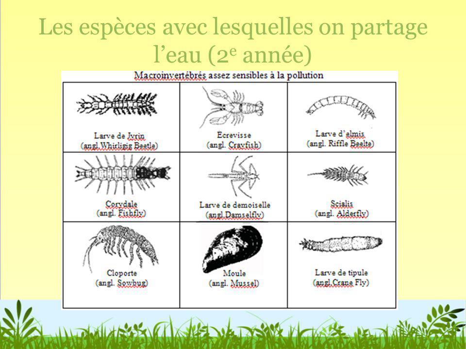 Les espèces avec lesquelles on partage l'eau (2e année)