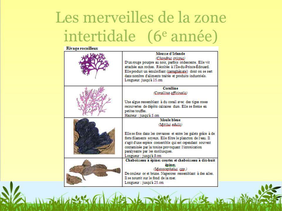Les merveilles de la zone intertidale (6e année)