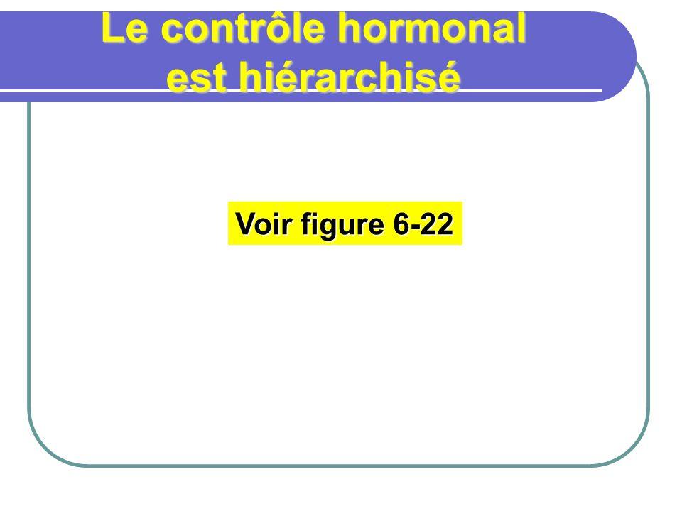 Le contrôle hormonal est hiérarchisé