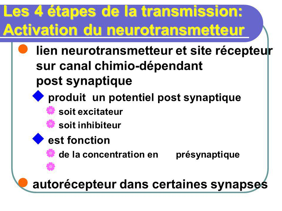 Les 4 étapes de la transmission: Activation du neurotransmetteur