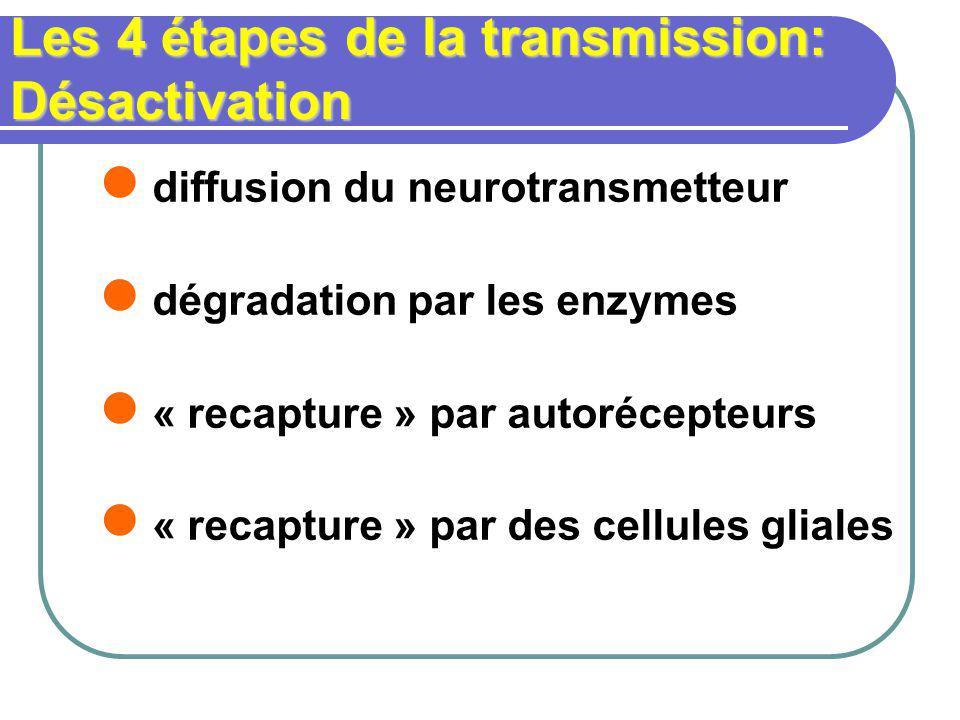 Les 4 étapes de la transmission: Désactivation