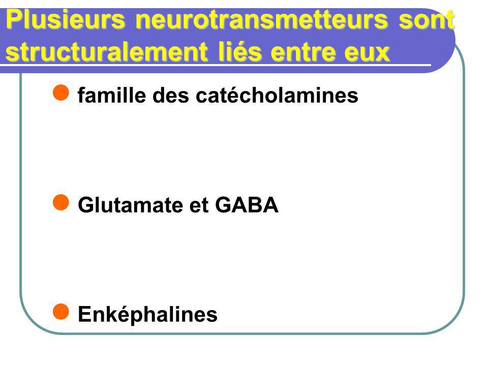 Plusieurs neurotransmetteurs sont structuralement liés entre eux