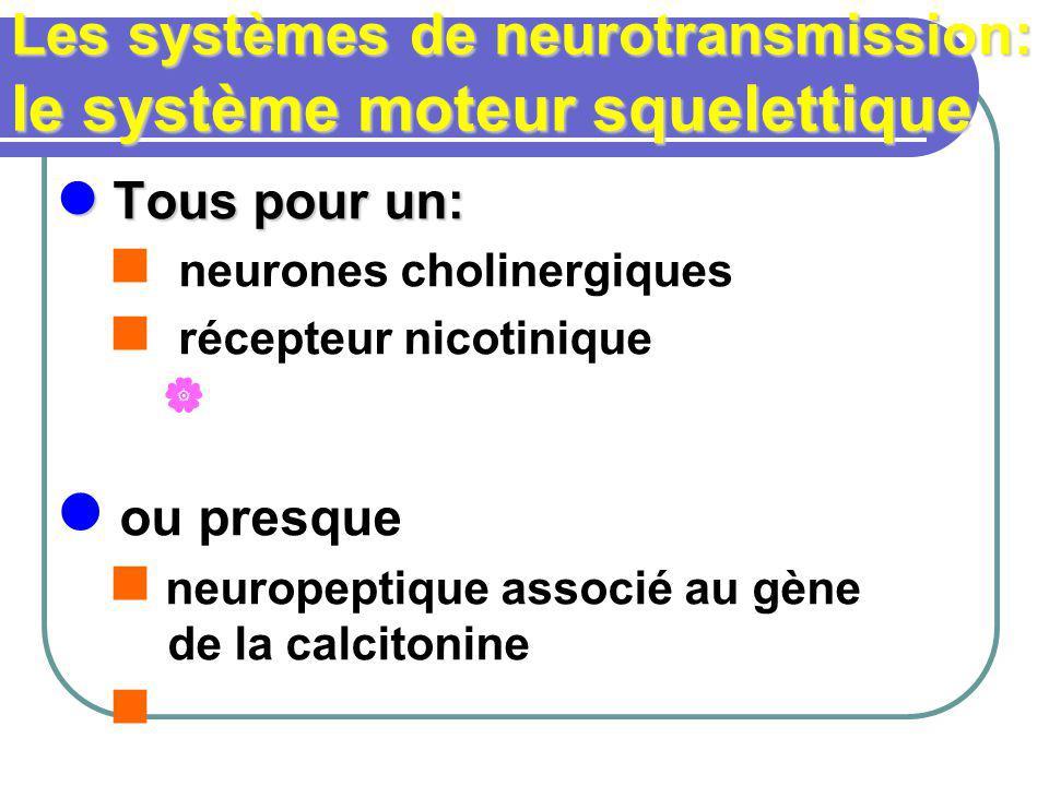 Les systèmes de neurotransmission: le système moteur squelettique