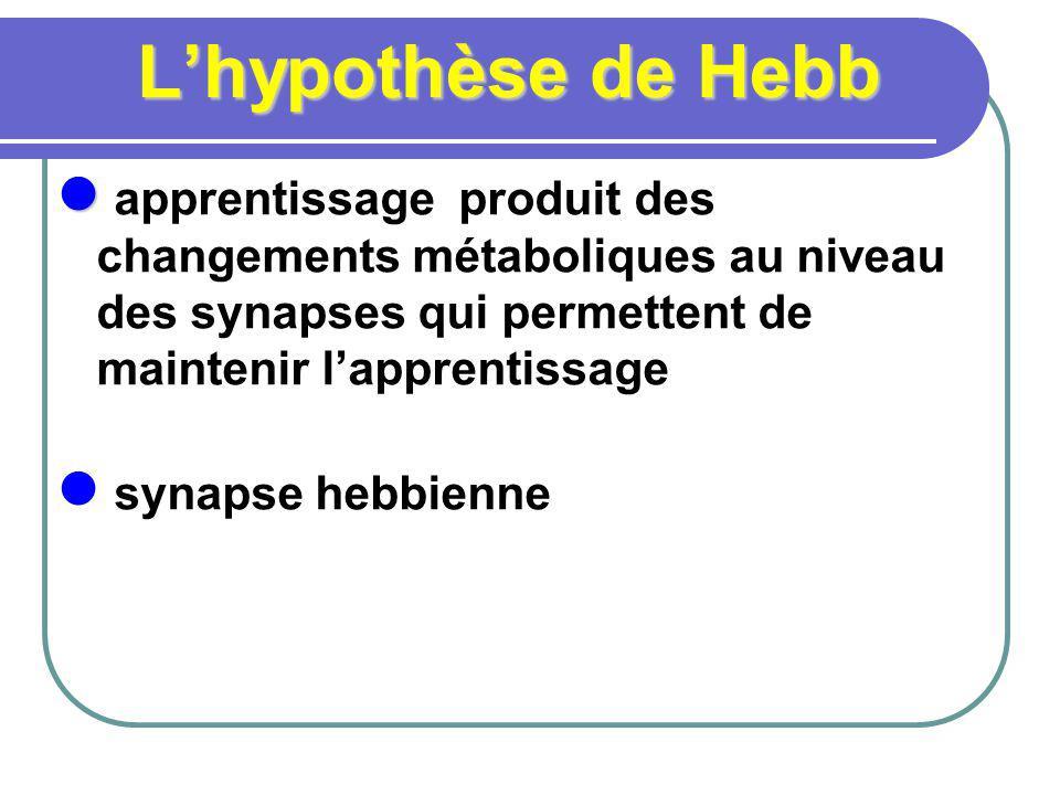 L'hypothèse de Hebb apprentissage produit des changements métaboliques au niveau des synapses qui permettent de maintenir l'apprentissage.