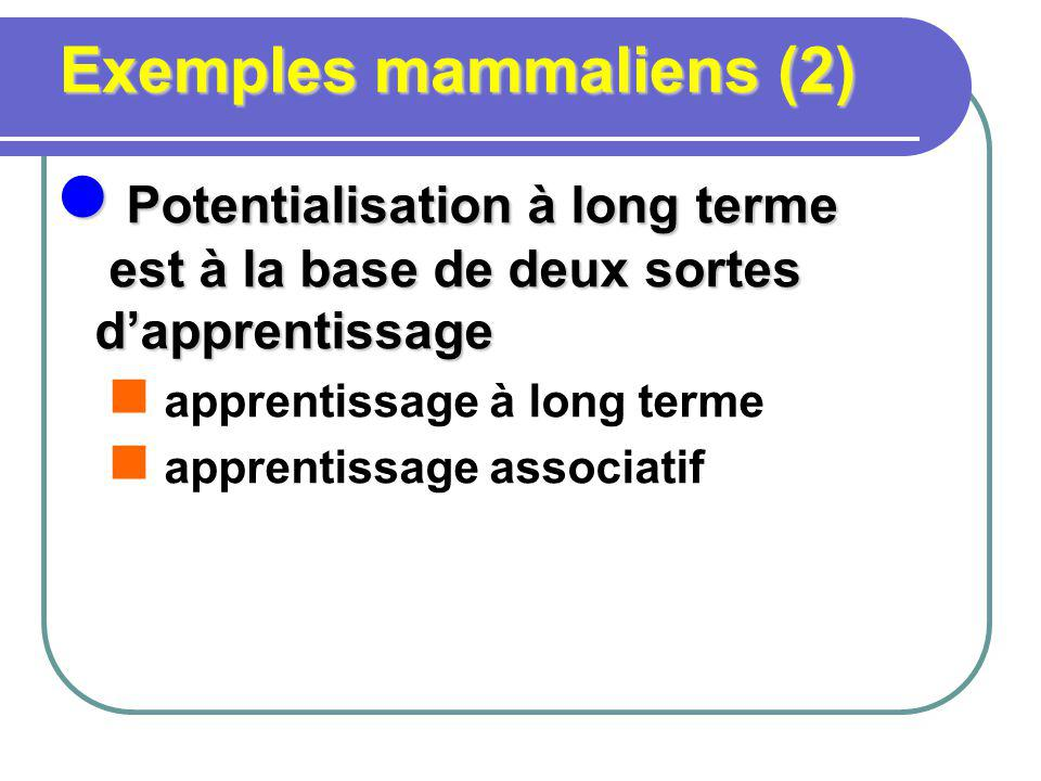 Exemples mammaliens (2)