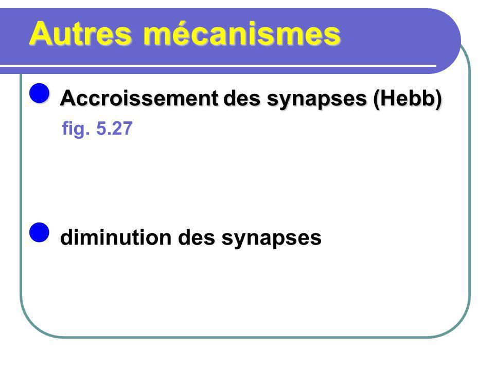 Accroissement des synapses (Hebb)