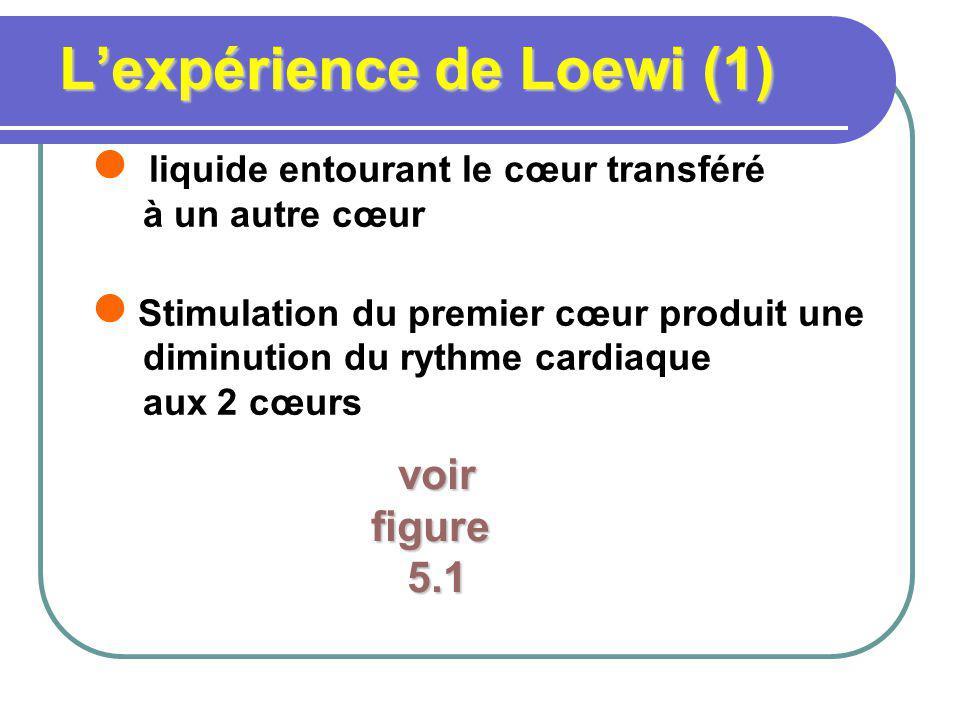 L'expérience de Loewi (1)