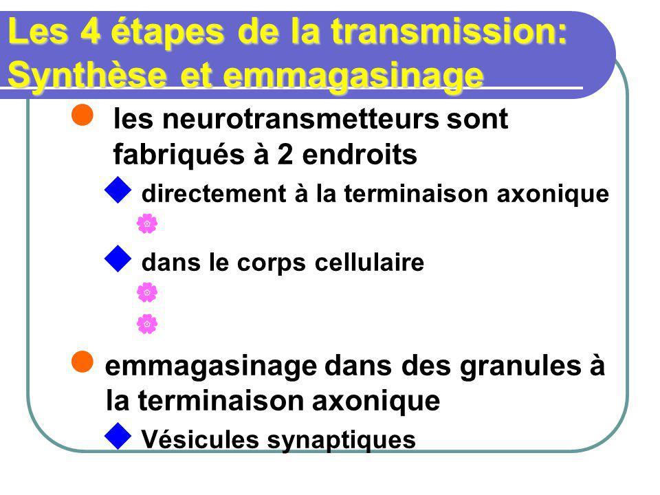 Les 4 étapes de la transmission: Synthèse et emmagasinage