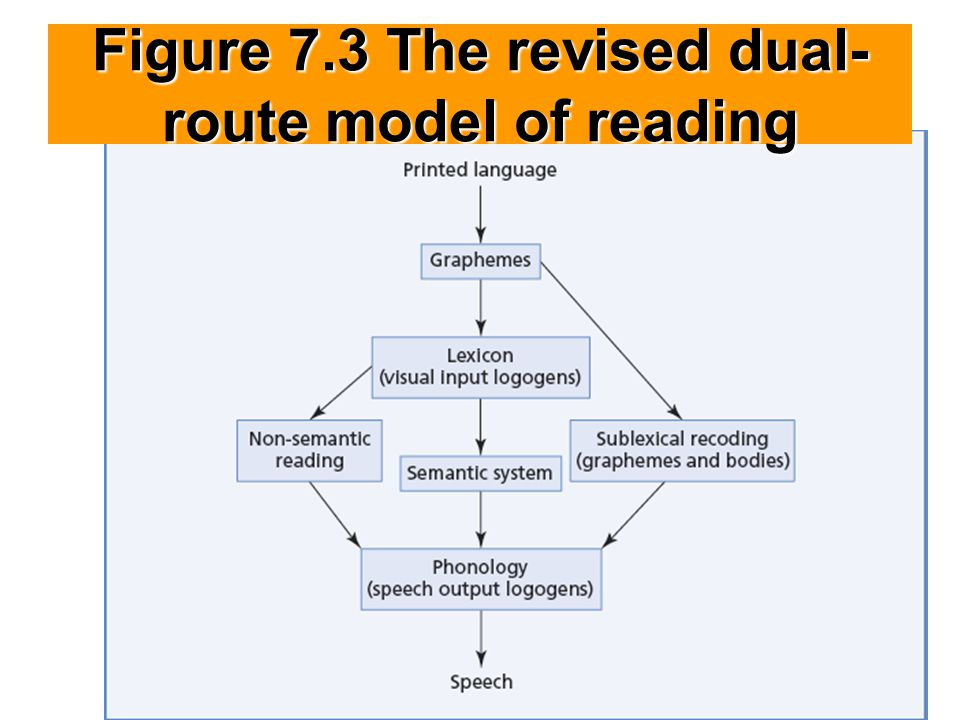 Figure 7.3 The revised dual-route model of reading