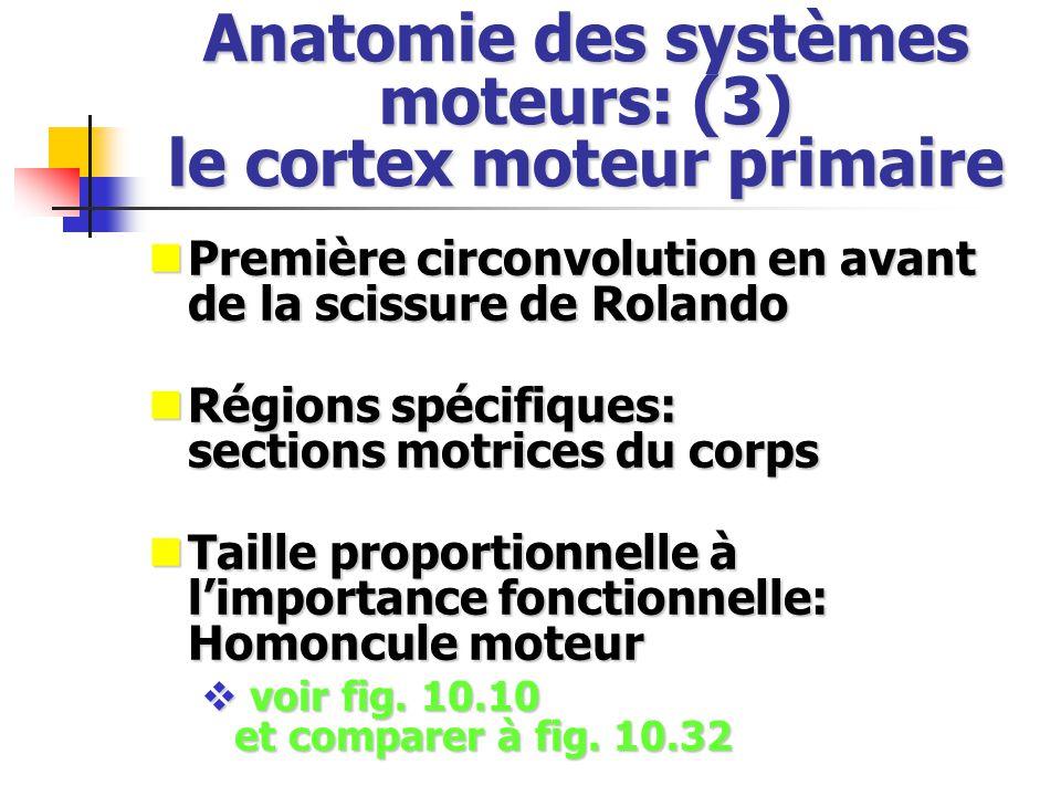 Anatomie des systèmes moteurs: (3) le cortex moteur primaire