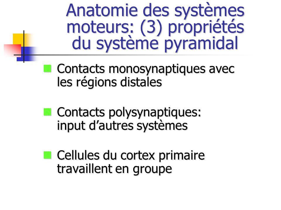 Anatomie des systèmes moteurs: (3) propriétés du système pyramidal
