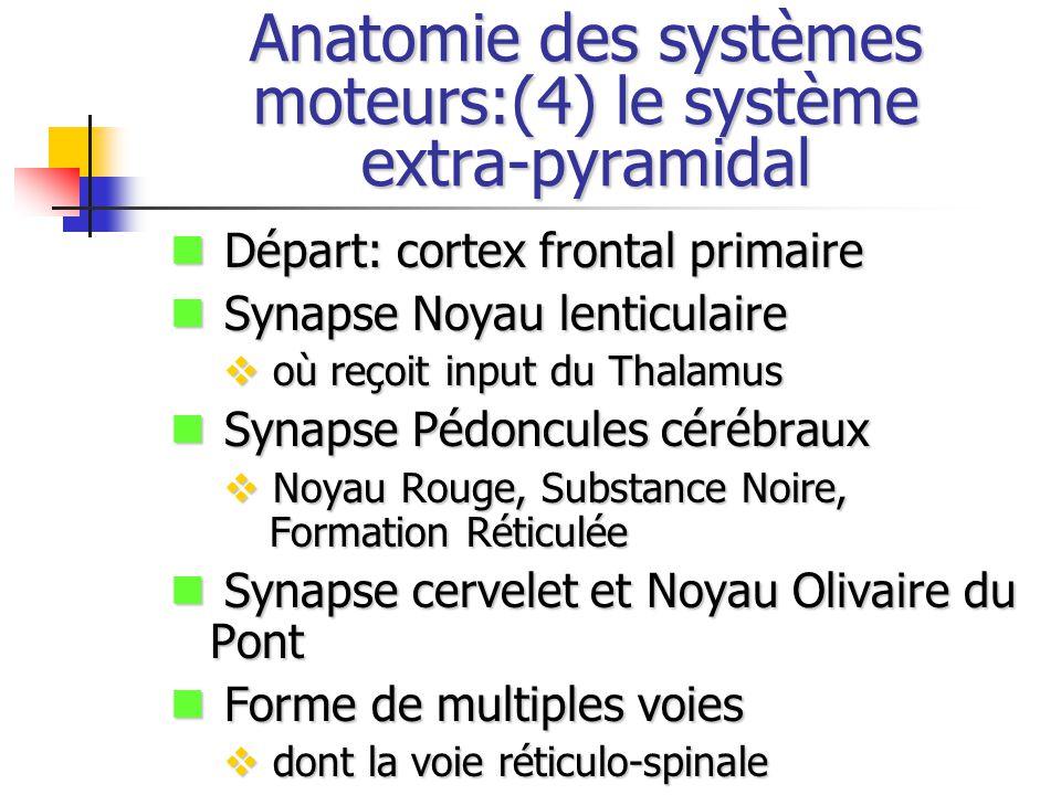 Anatomie des systèmes moteurs:(4) le système extra-pyramidal