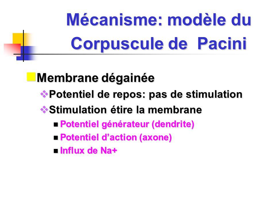 Mécanisme: modèle du Corpuscule de Pacini