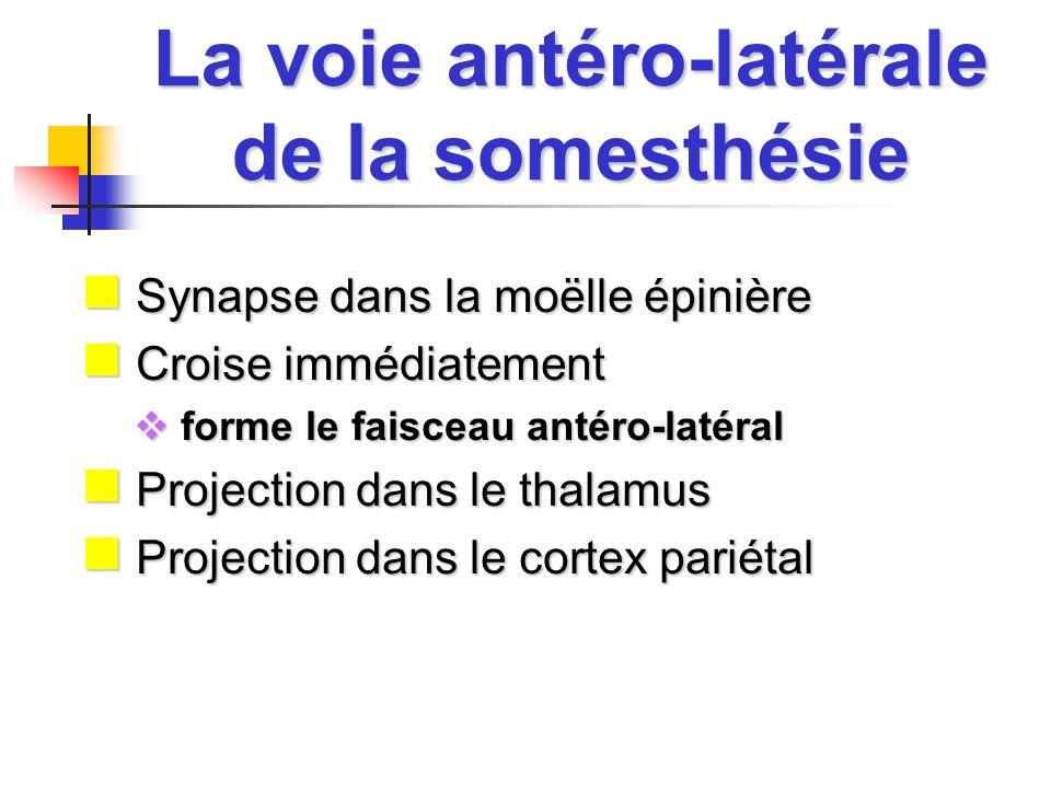 La voie antéro-latérale de la somesthésie