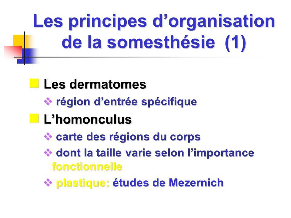 Les principes d'organisation de la somesthésie (1)