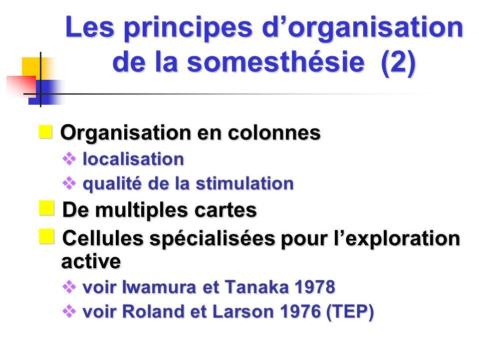 Les principes d'organisation de la somesthésie (2)