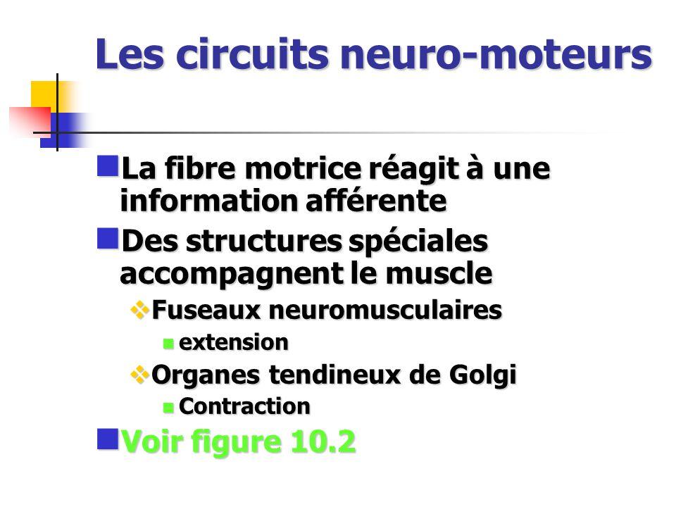 Les circuits neuro-moteurs