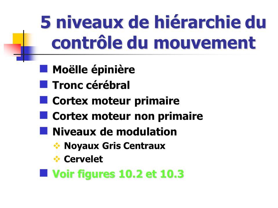 5 niveaux de hiérarchie du contrôle du mouvement