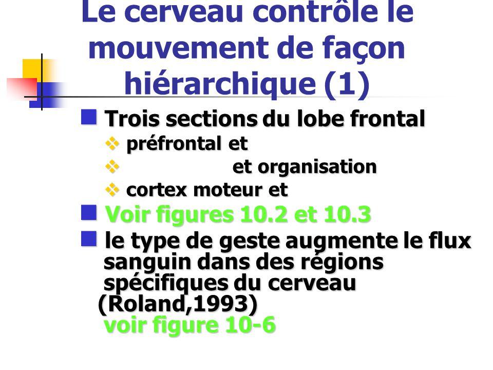 Le cerveau contrôle le mouvement de façon hiérarchique (1)