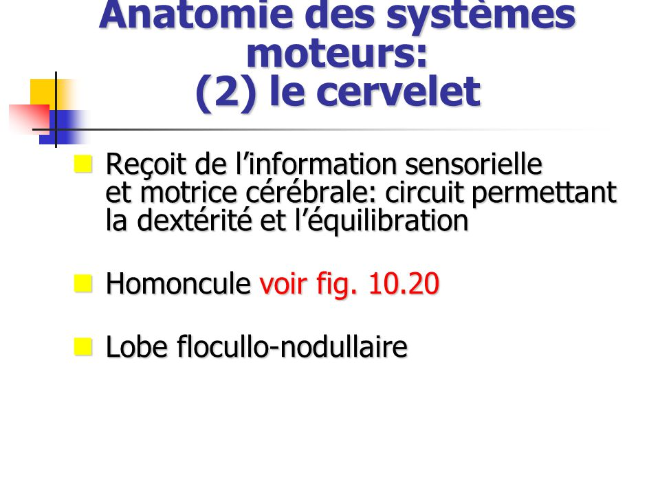 Anatomie des systèmes moteurs: (2) le cervelet