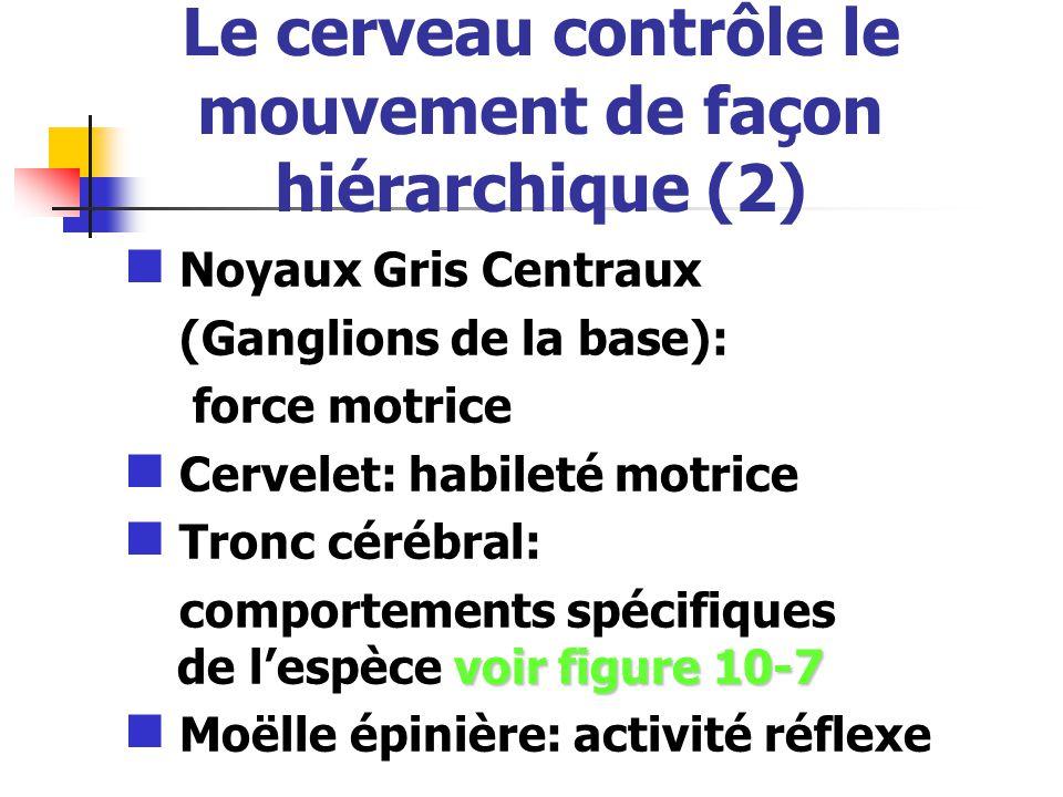 Le cerveau contrôle le mouvement de façon hiérarchique (2)