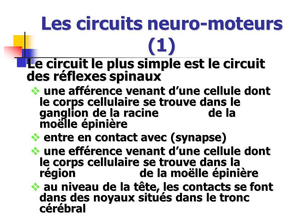 Les circuits neuro-moteurs (1)