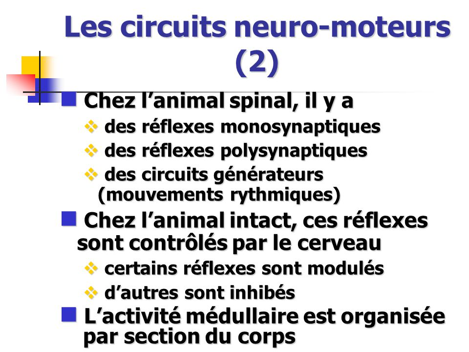 Les circuits neuro-moteurs (2)