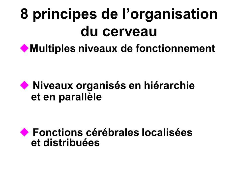 8 principes de l'organisation du cerveau