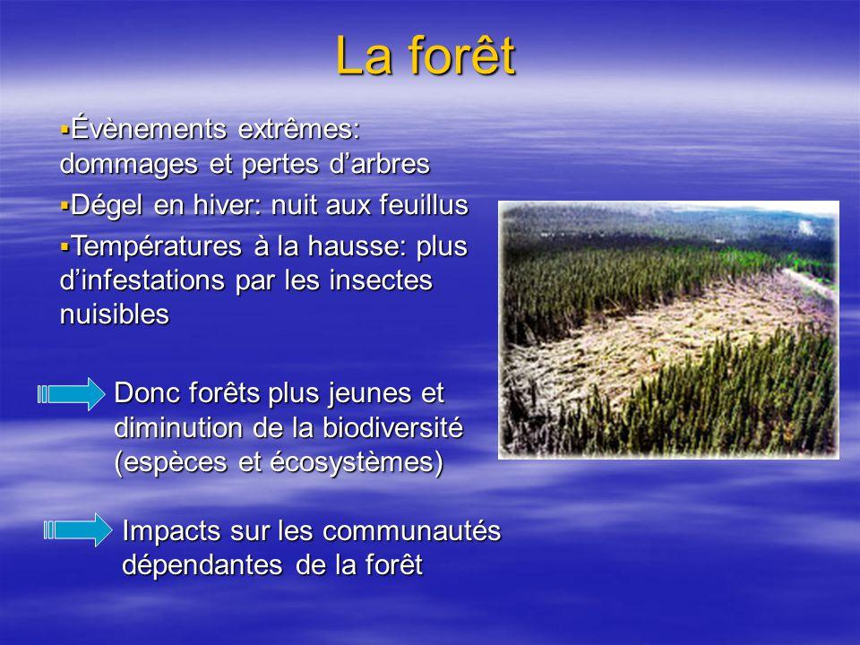 La forêt Évènements extrêmes: dommages et pertes d'arbres