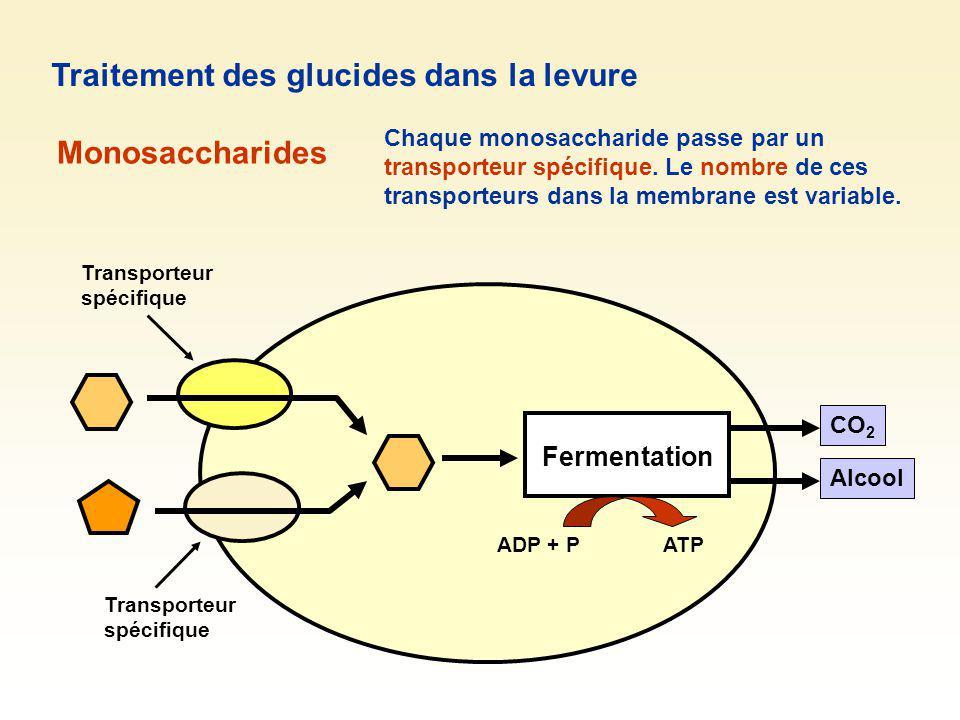 Traitement des glucides dans la levure