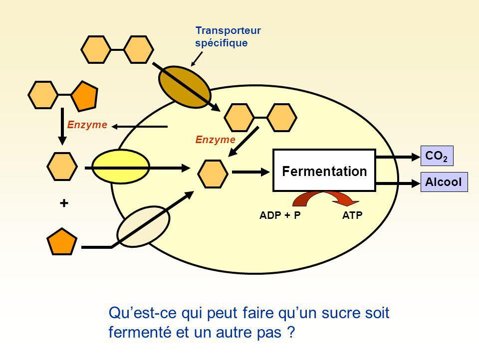 laboratoire fermentation