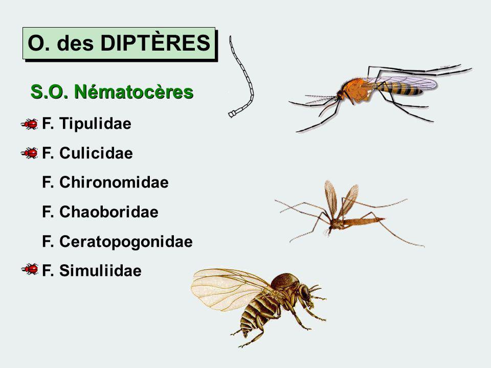 O. des DIPTÈRES S.O. Nématocères F. Tipulidae F. Culicidae