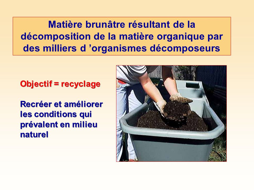Matière brunâtre résultant de la décomposition de la matière organique par des milliers d 'organismes décomposeurs
