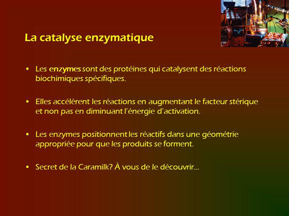La catalyse enzymatique