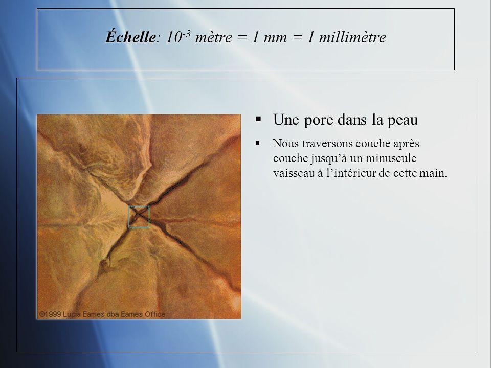 Échelle: 10-3 mètre = 1 mm = 1 millimètre