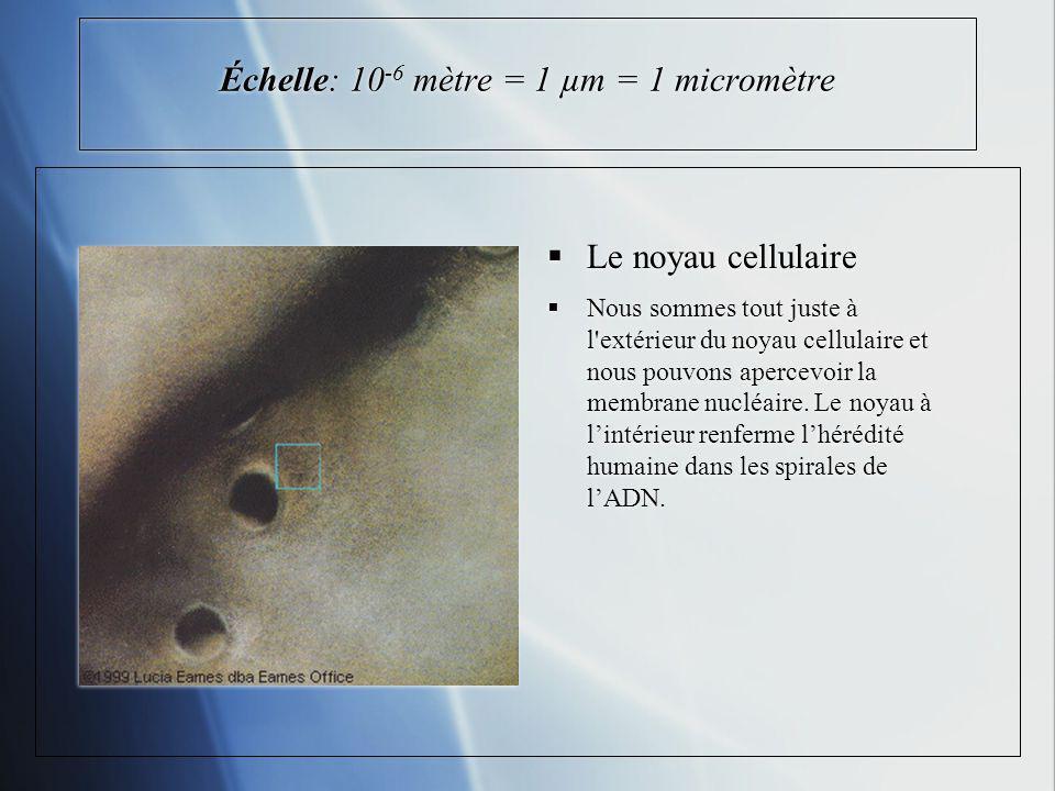 Échelle: 10-6 mètre = 1 µm = 1 micromètre
